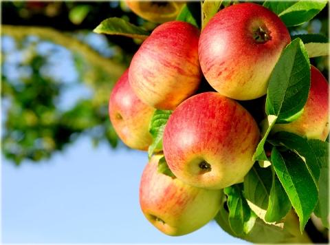 Obels sodinukas